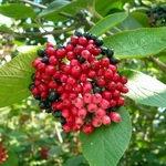Лечение аллергических заболеваний при помощи листьев и трав