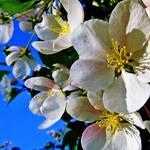 Виды аллергии, которые появляются весной